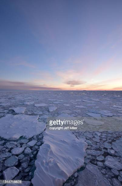ice floes in pack ice at sunset, southern ocean, antarctica. - pack ice stock pictures, royalty-free photos & images