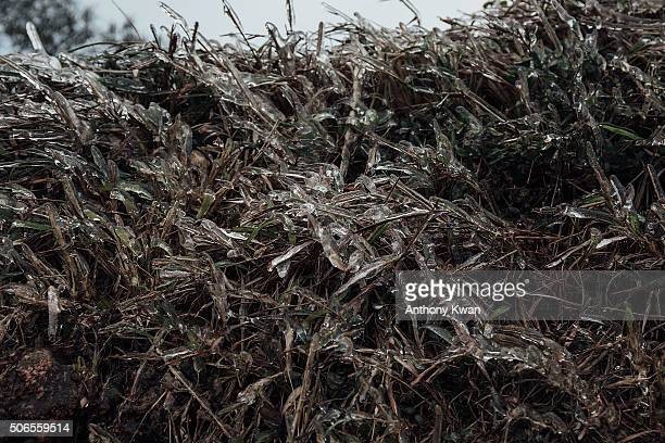 Ice forms on plants on the slope of Kowloon Peak on January 24 2016 in Hong Kong Hong Kong Hong Kong was hit by a cold snap today with temperatures...