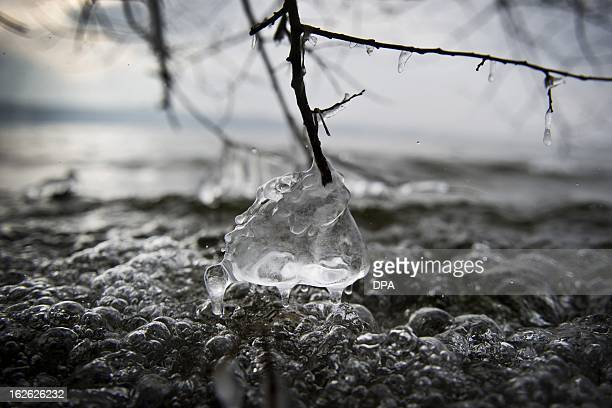 Ice hangs from a branch on Lake Starnberg on February 25 2013 in Munich Germany AFP PHOTO / VICTORIA BONNMEUSER /GERMANY OUT