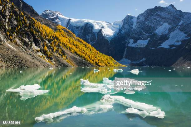 ice in lake of the hanging glacier in the purcell mountain range, british columbia, canada - larch tree stock pictures, royalty-free photos & images