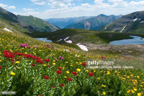 ice lake with alpine wildflower meadow - san juan mountains stock photos and pictures