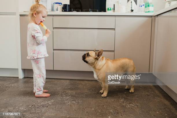 ice lolly showdown - dog eats out girl stock photos and pictures