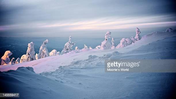 Ice monster at Mount Zao Yamagata