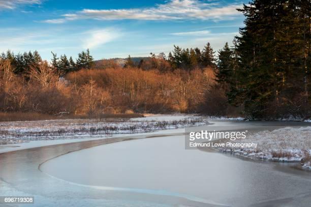 Ice on a Slough on Lummi Island