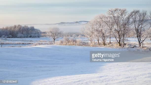 ice on tree - 深い雪 ストックフォトと画像