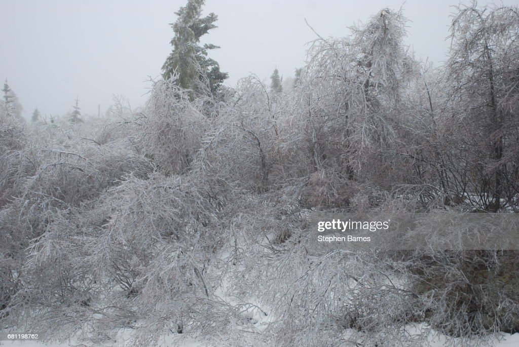 Ice Storm In Conception Bay South Newfoundland And Labrador Canada