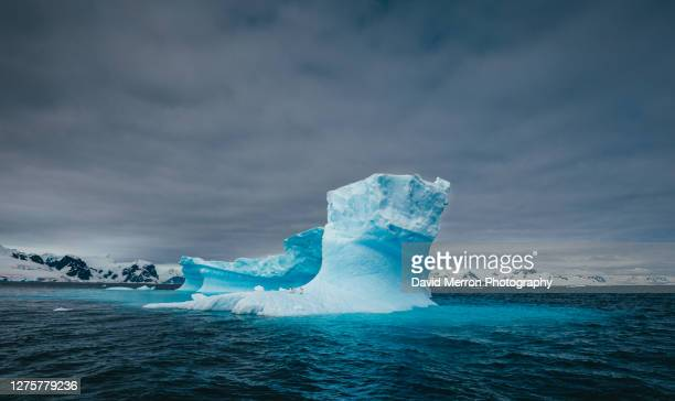 iceberg floats in antarctica with penguins resting on top - ice floe stock pictures, royalty-free photos & images