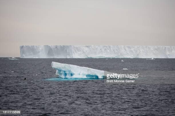 iceberg in antarctica - antarctic sound foto e immagini stock