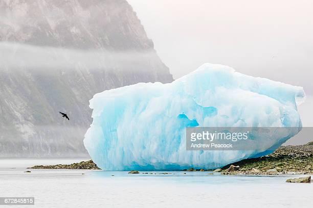 Iceberg, McBride Inlet, Glacier Bay NP