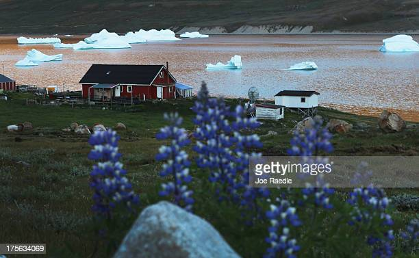 Icebergs and flowers are seen near the home of potato and sheep farmer Otto Nielsen on July 30 2013 in Qaqortoq Greenland Nielsen said that even...