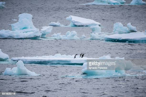 Icebergs and penguins, South Orkeny islands