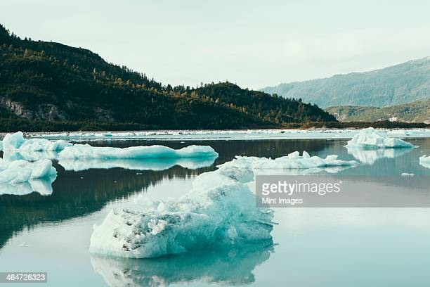 icebergs floating off the shore at the end of the mcbride glacier,off alaska. - alaska us state stock pictures, royalty-free photos & images