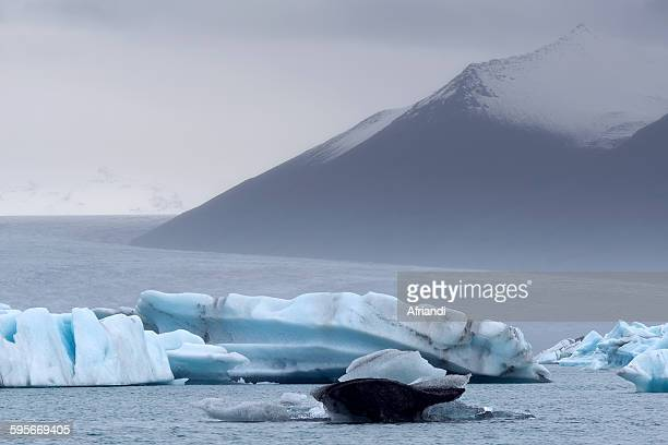 icebergs in jokulsarlon, iceland - breidamerkurjokull glacier stock photos and pictures