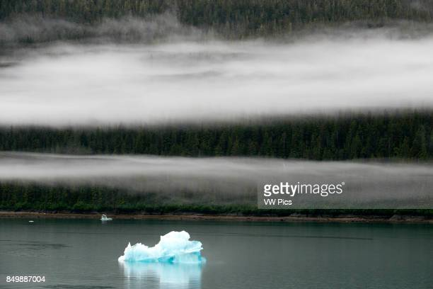 Icebergs near the Dawes Glacier Endicott Arm Tongass National Forest Alaska USA Cliffwalled fjords sliced into the mountainous mainland are on tap...
