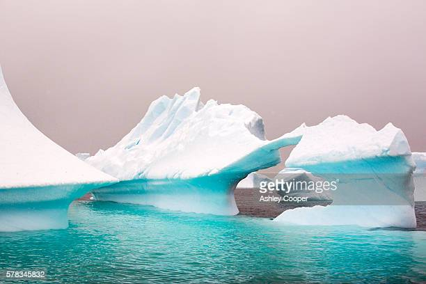 icebergs oof curverville island on the antarctic peninsular, which is one of the fastest warming places on the planet. - oceano antartico foto e immagini stock