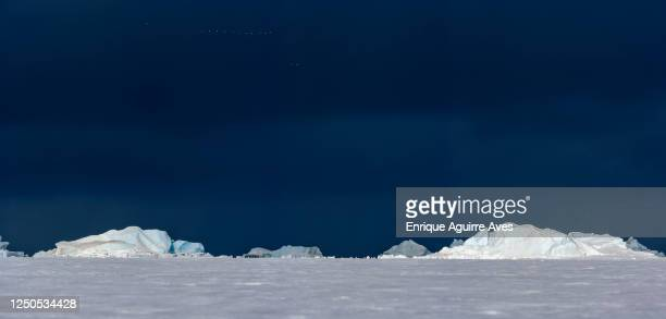 icebergs, weddell sea, antarctica - weddell sea - fotografias e filmes do acervo