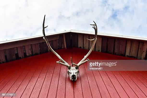 Iceland, deer antler hanging at red facade of frame house