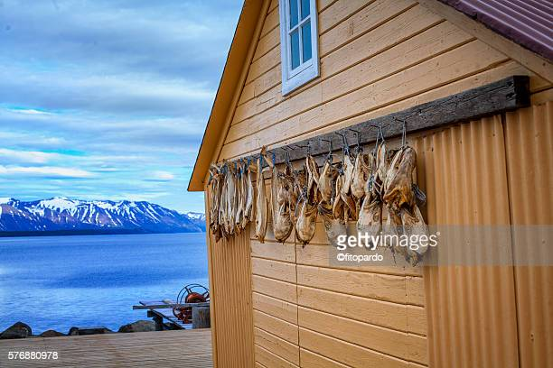 Iceland Dry Fish