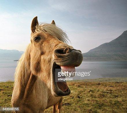 Iceland, eskifjordur, Portrait of Icelandic horse by lake