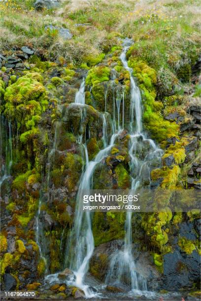 iceland waterfall - evergreen plant stock pictures, royalty-free photos & images