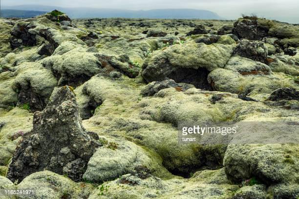 isländische vulkanlandschaft - tundra stock-fotos und bilder