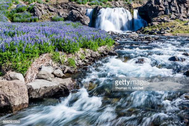 iceland-sjavarfoss - brook mitchell stock pictures, royalty-free photos & images