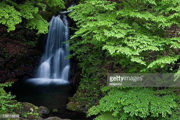 ichiban falls with green foliage - isogawyi stock pictures, royalty-free photos & images