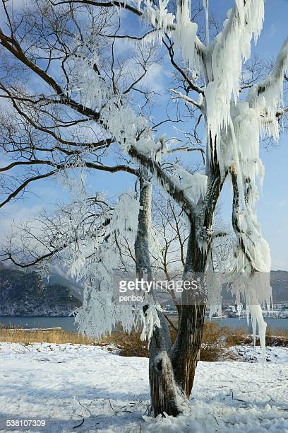 Icicle of tree