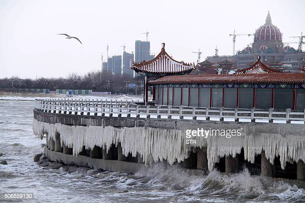 TOPSHOT Icicles are seen by the seaside in Penglai in eastern China's Shandong province on January 24 2016 Much of China shivered on January 23 as a...