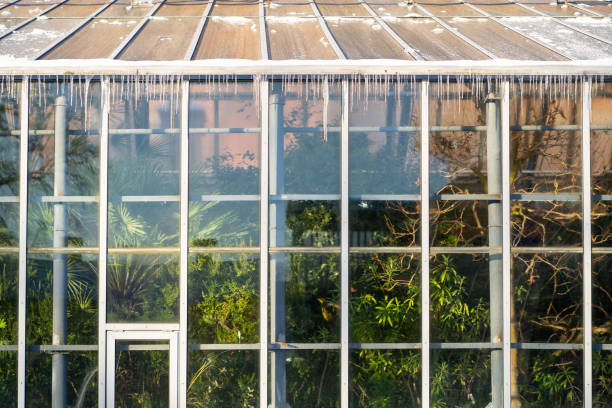Icicles Hanging Down From A Roof Tropical Greenhouse In Winter At Sunny Frosty Day. Indoor Garden.