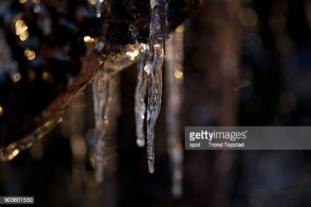 Icicles in light