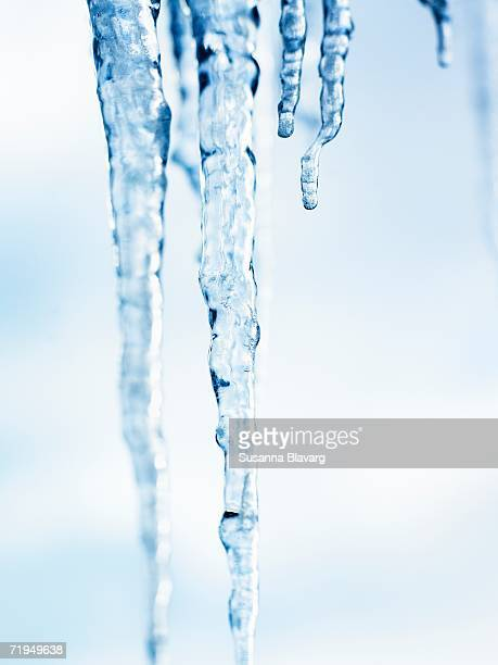 Icicles on a white background.