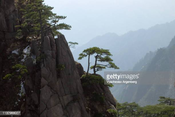 iconic view of huangshan peaks and pines, china - argenberg imagens e fotografias de stock