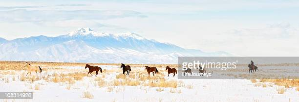 iconic wild  horse roundup in the snowy  winter months - uncultivated stock pictures, royalty-free photos & images