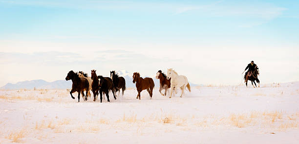 Iconic Wild  Horse Roundup In Winter Months Wall Art
