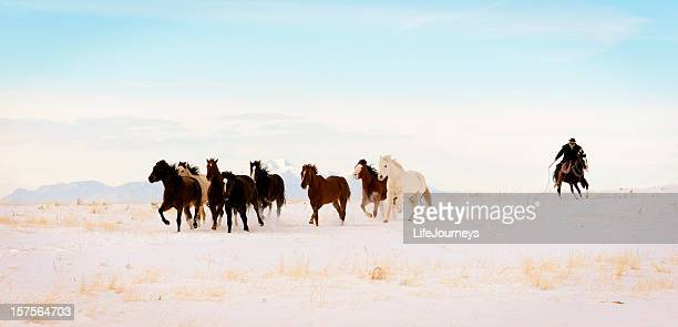 Iconic Wild  Horse Roundup In Winter Months