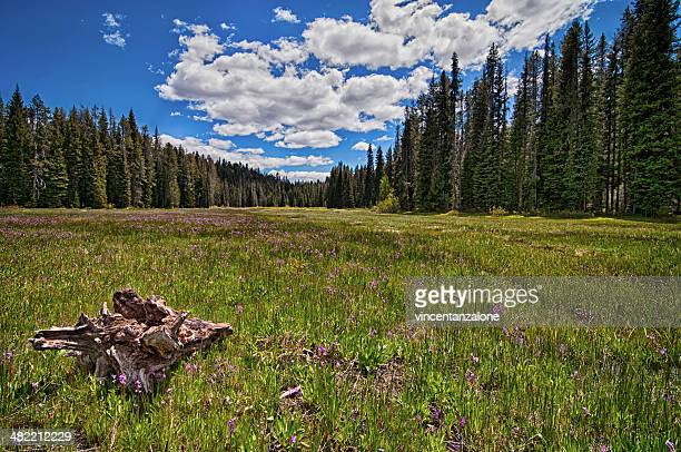 USA, Idaho, Boise, Boise National Forest, Long Creek Road, Field in Mountains