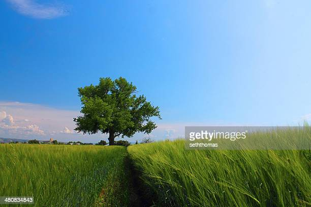 usa, idaho, bonneville county, idaho falls, tree in a field, idaho falls, idaho, america, usa - idaho falls stock pictures, royalty-free photos & images