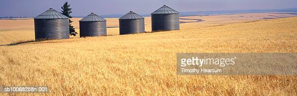 usa, idaho, squirrel, grain bins and fields of ripe wheat. - timothy hearsum stock photos and pictures