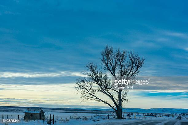idaho winter scene at dawn - idaho falls stock photos and pictures