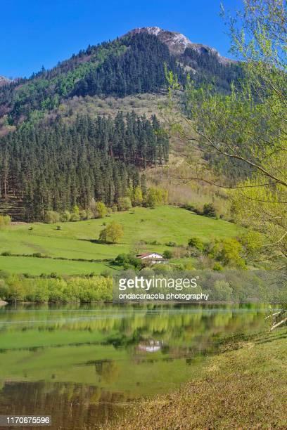 idillic swamp lake - turismo ecológico fotografías e imágenes de stock