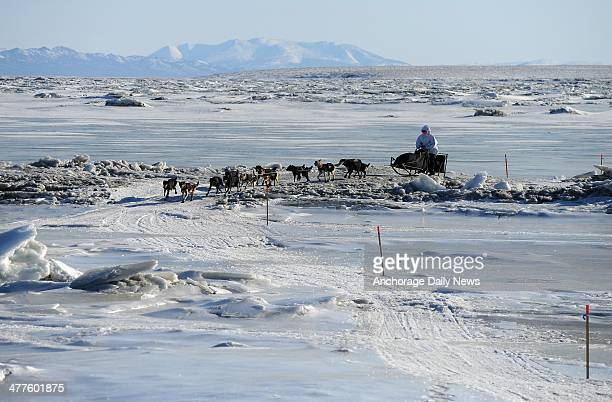 Iditarod musher Martin Buser from Big Lake AK comes in off the ice and into the Koyuk checkpoint during the 2014 Iditarod Trail Sled Dog Race on...