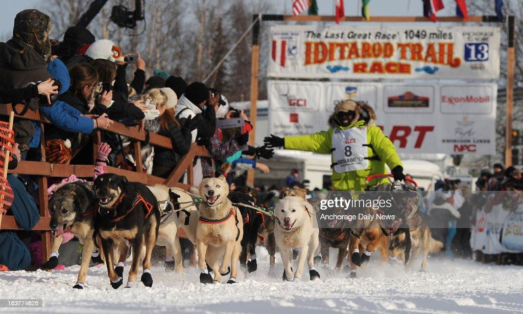 Iditarod Sled Dog May : News Photo