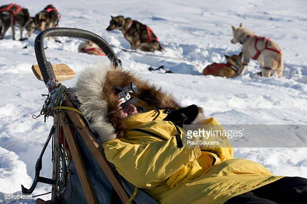 iditarod musher sleeping on his sled - iditarod stock pictures, royalty-free photos & images