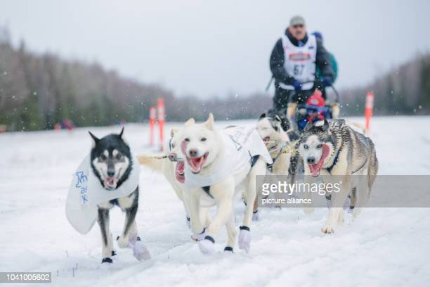 Iditarod rookie Chuck Schaeffer arrives at the finish of the ceremonial start to the 2015 Iditarod Sled Dog Race at Anchorage Alaska on Saturday The...