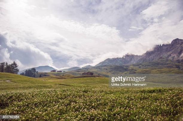 Idyllic alpine scenery in South Tyrol (Südtirol)