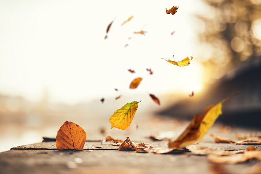 Idyllic Autumn Scene 992064720