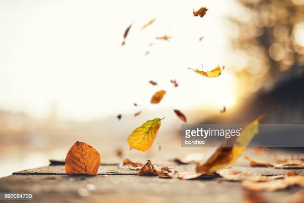idyllic autumn scene - wind stock pictures, royalty-free photos & images