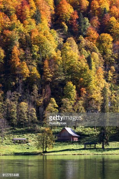 Idyllic autumn scenery, lush foliage, deciduous trees, lake reflecting surrounding mountains