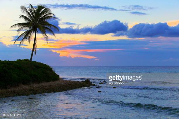 idyllic beach at gold colored sunset - montego bay - jamaica, caribbean sea - montego bay stock pictures, royalty-free photos & images